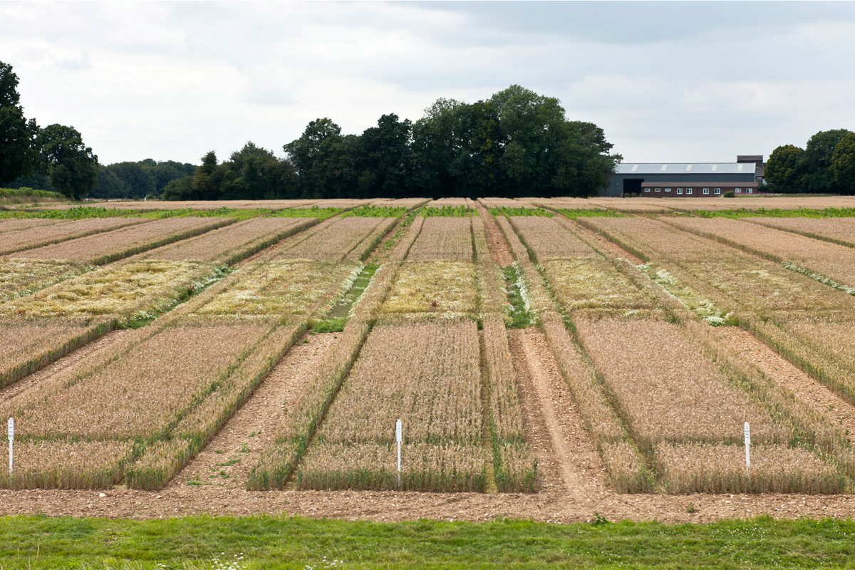 Broadbalk Field Credit: Rothamsted Research
