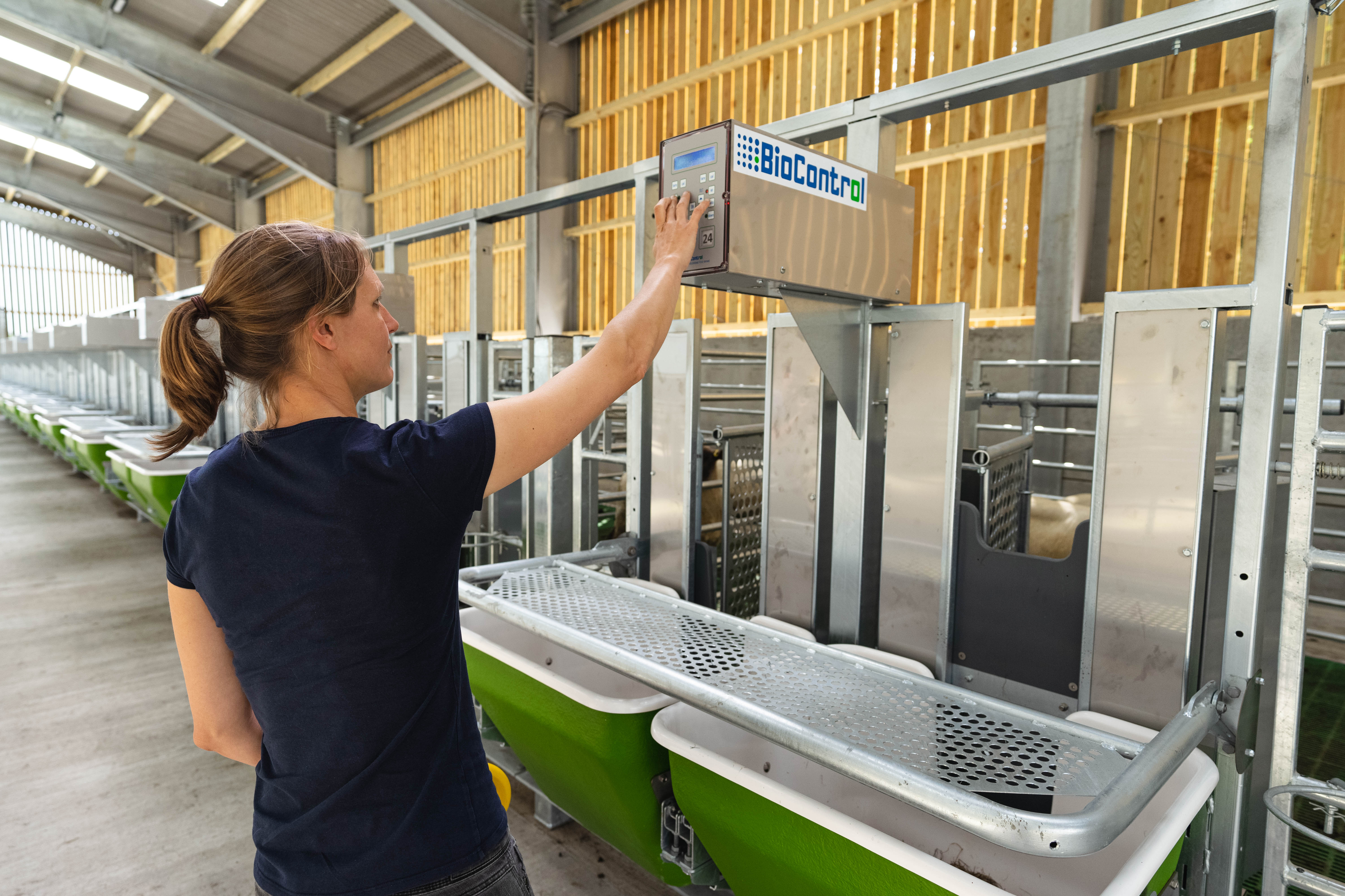 Farm lab adds 'high tech sheep shed' | Rothamsted Research