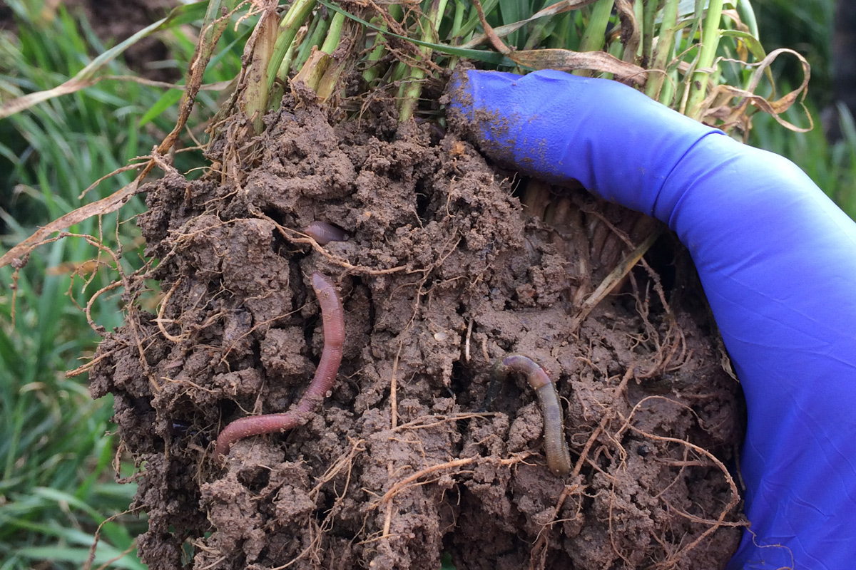 Topsoil worms Credit: @wormscience