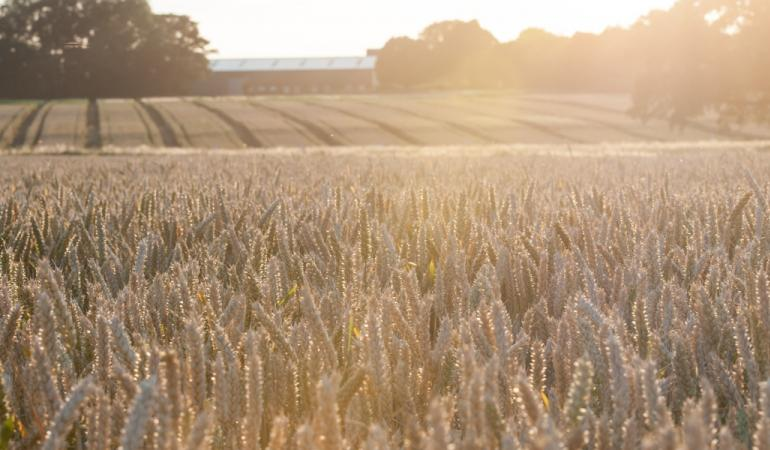 Wheat-fields - Rothamsted Research