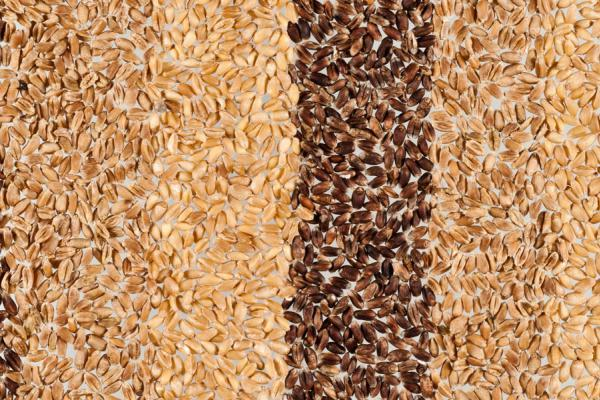 Wheat grain Credit: Rothamsted Research