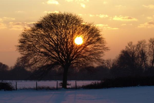 Snow Scene - copyright Rothamsted Research