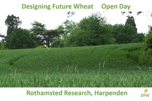 Rothamsted Designing Future Wheat Open Day