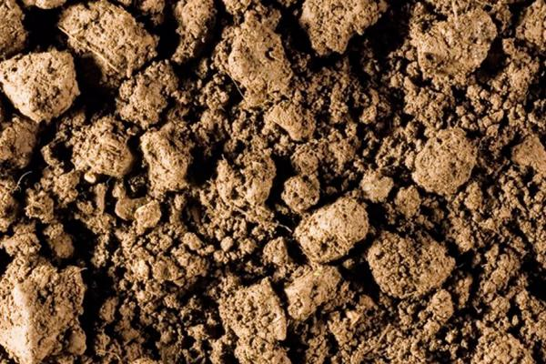 Top soil. GeoNutrition. Credit: Rothamsted Research