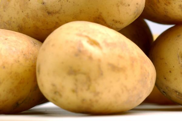 Potatoes - credit Rothamsted Research
