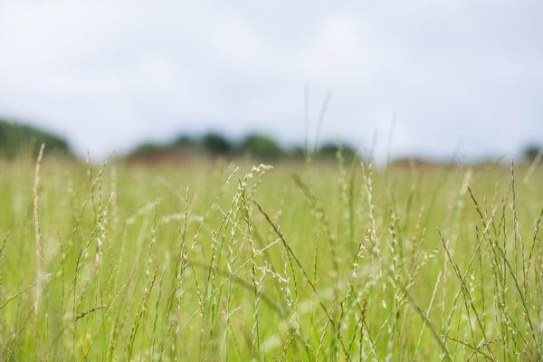 Rothamsted North Wyke Grassland and Meadow - Copyright Rothamsted Research