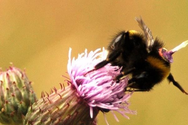 Radar tracking reveals the 'life stories' of bumble bees