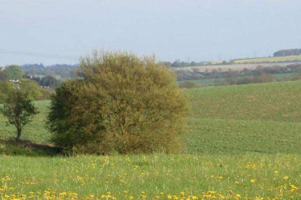The UK countryside - © Rothamsted Research
