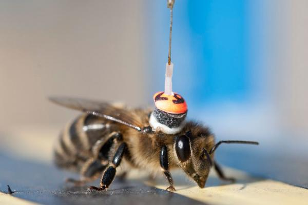 Space Radar Pollinator - copyright Rothamsted Research