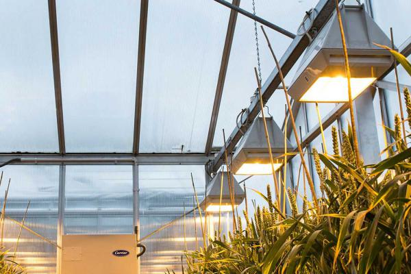 Rothamsted Research | Global Science, Lasting Benefits