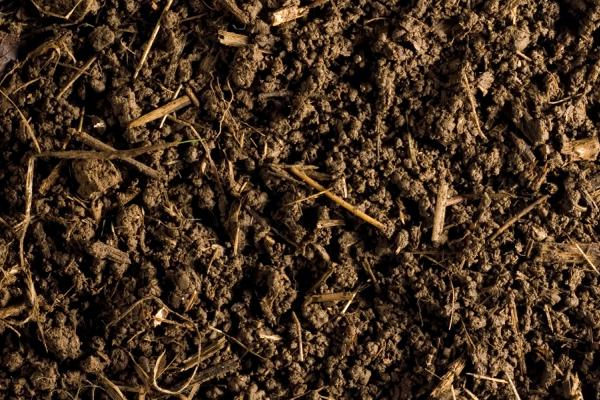 Soil - Credit Rothamsted Research
