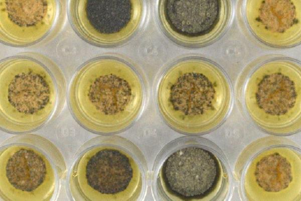 fungi plates - Credit Rothamsted Research